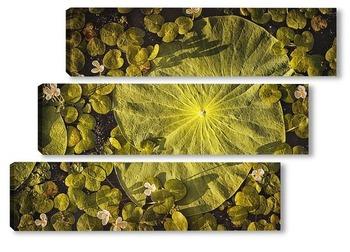 Модульная картина Лист лотоса Комарова лежит на воде в пруду. Его окружают миниатюрные белые цветы