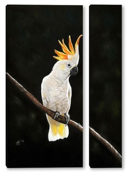 Модульная картина Попугай Какаду