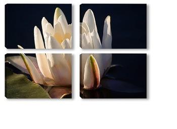 Модульная картина Закатная водяная лилия
