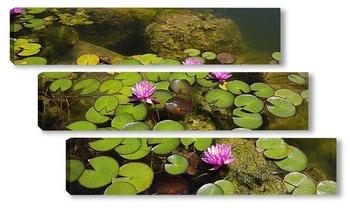 Модульная картина Розовые кувшинки в пруду