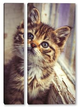 Модульная картина Котёнок в окне