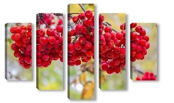 Модульная картина Рябины алая гроздь