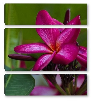 Модульная картина Цветок плюмерии