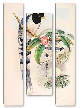 Модульная картина Птицы Азии