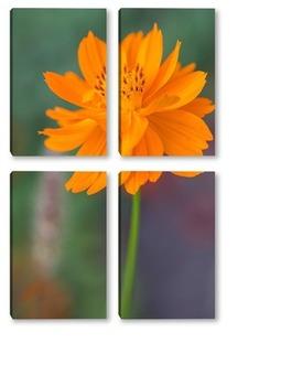 Модульная картина Оранжевые цветы