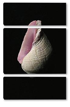 Модульная картина Shell012