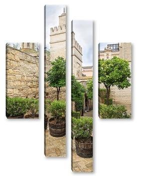 Маленькие оливы внутри крепости