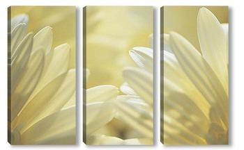 Модульная картина Flower055