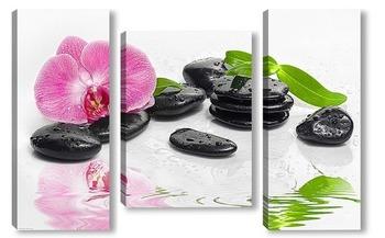 Модульная картина Спа камни и орхидея 2