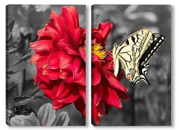 Модульная картина Желтая бабочка на красном цветке