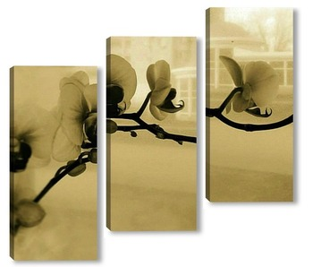 Модульная картина Фаленопсис винтаж