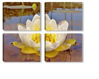 Модульная картина Белая красавица.