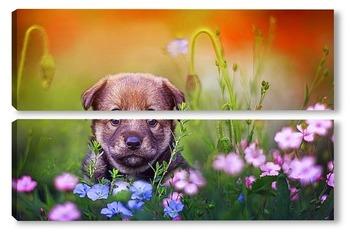 Модульная картина щенок на лугу