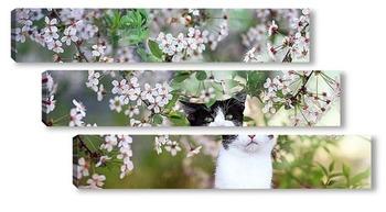 Модульная картина котенок и цветы
