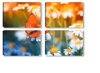 Модульная картина маленькая бабочка на цветущем поле ромашек в солнечный летний день
