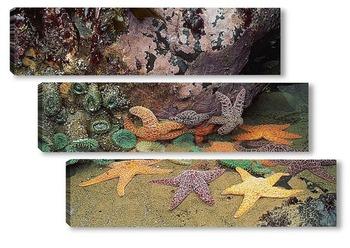Модульная картина Starfish029