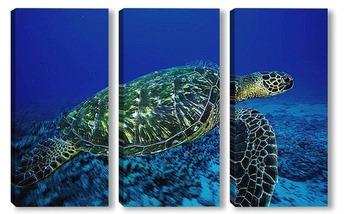Модульная картина Turtle025