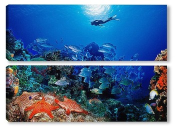 Модульная картина Coral004
