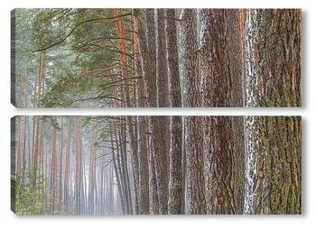 Модульная картина Лесные великаны