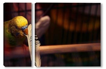 Модульная картина Волнистый попугай