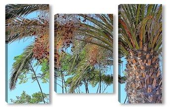 Модульная картина Финиковая пальма
