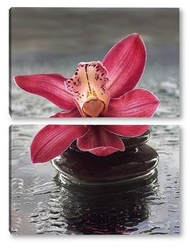 Модульная картина Розовая орхидея на мокром стекле