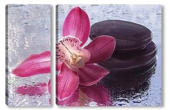 Модульная картина Цветок орхидеи на мокром стекле