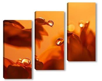 Модульная картина Капли на лепестках цветов