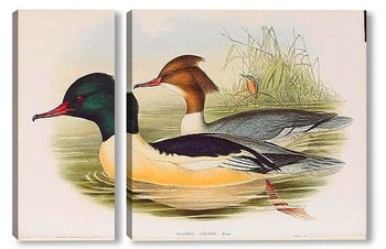 Модульная картина Птицы Великобритании,