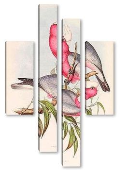 Модульная картина Птицы Австралии