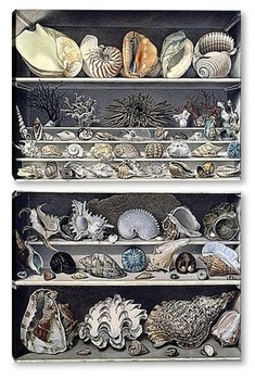 Модульная картина Коллекция раковин