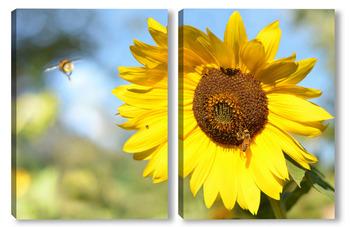 Модульная картина Подсолнух с пчёлкой и шмеликом