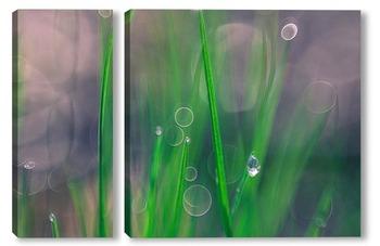 Модульная картина трава в росе