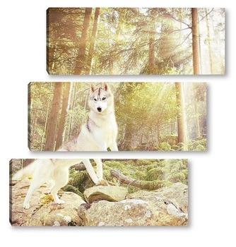 Модульная картина Белоснежный волк