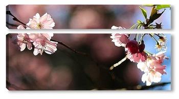 Модульная картина Японская весна
