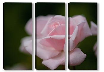 Нежно-розовая