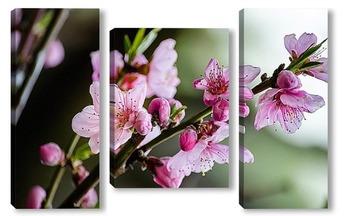 Модульная картина Ветка цветущего персика