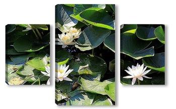 Модульная картина Водяные лилии