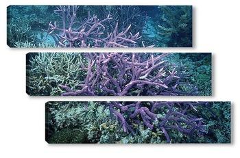 Модульная картина Coral010