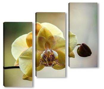 Модульная картина Орхидея фаленопсис