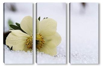 Модульная картина Flower715