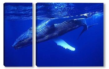 Модульная картина Whale018