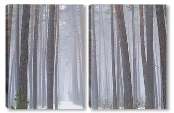 Модульная картина Линии леса