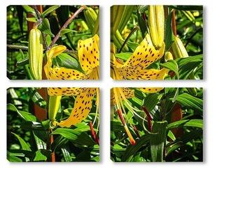 Модульная картина Желтая тигровая лилия