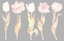 Нежные тюльпаны