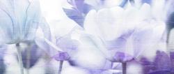 Наклейки Голубые тюльпаны