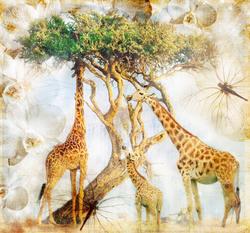 Наклейки Жирафы на прогулке