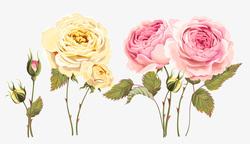 Наклейки Прекрасные розы