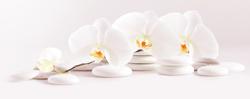 Наклейки Нежная орхидея