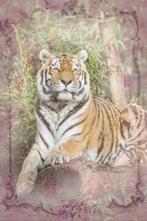 Наклейки Величественный тигр